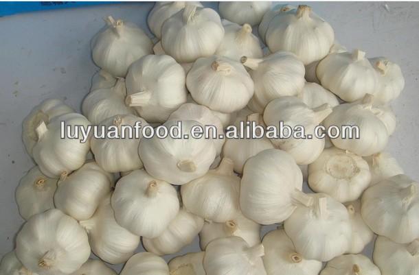 fresh natural garlic with competitive price/garlic manufacturer
