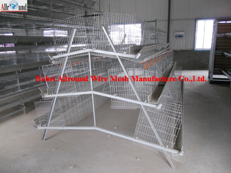 design chicken layer cage