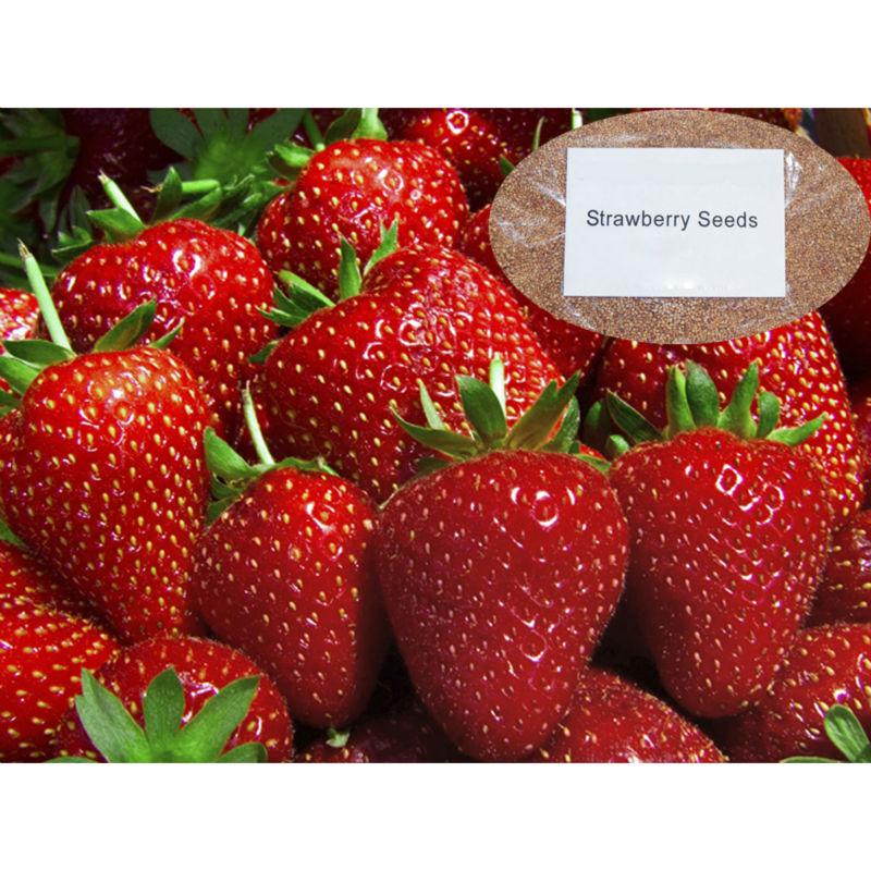 Strawberry Shortcake Cake  OMG Chocolate Desserts