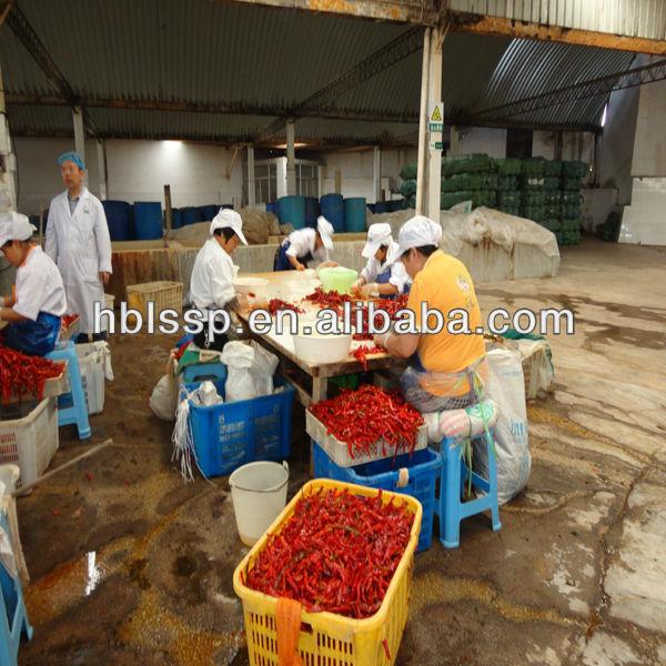 preserved red chilli pepper