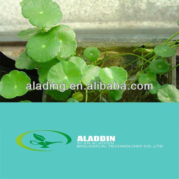 Total Triterpene 10%-80% ( Centella asiatica L. )