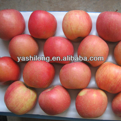 china supplier apple in the lowest price to all of the world