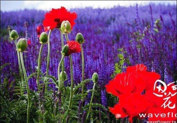 flores de jardim tipos: canteiros de flores flor jardim plantas de jardim plantas aromáticas
