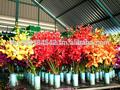 Orquídeas de exportación, frescas flores de orquídeas. Acabaderecogerorquídeas flor, la orquídea dendrobium flores.