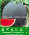 AW021 Dafo diferentes tipos de semillas de semillas de sandía híbridos negro