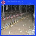 foor alimentação sistema de alimentação automática de frango sistema