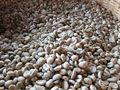 A granel de vietnam grano de café verde, grano de café robusta