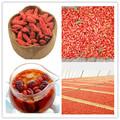 Salud chinas orgánicas del goji bayas Extreme