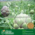 extrait de plante en poudre 5% cynarin extrait d'artichaut