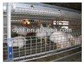 nuevo diseño de buena calidad de pollos de engorde de aves de corral equipo de granja para la granja de pollos