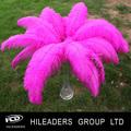 venta al por mayor de decoración blanqueada a granel del tinte plumas de avestruz lo112