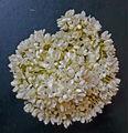 madurai de flor de jazmín