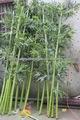 Venda quente artificial de árvores de bambu, artificial decorativa de bambu, bambu falso made in china