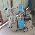 venda cabra ordenha preço da máquina de uma máquina de ordenha para cabras