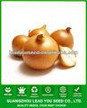 Forma jon01 Ronda semillas venta muy caliente de siembra para los precios de las semillas de cebolla