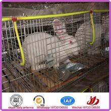 carne de conejo jaulas