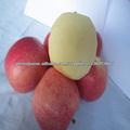 boa qualidade fuji vermelho maçã, maçã vermelha topo
