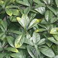Valla para cubrir jardín con plantas ornamentales