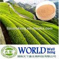 100% natural extracto de té verde en polvo con 98% los polifenoles del té