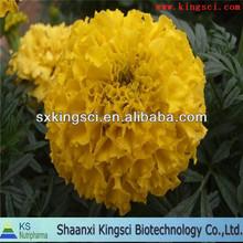 La producción de lotes de extracto de caléndula( luteína)