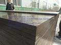 marine madeira compensada para a construção