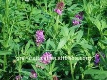 extracto de alfalfa