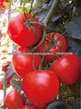 Hongxi híbridos de tomate semillas semillas de hortalizas