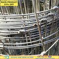 Caliente- galvanizado sumergido y ganado caprino cerca( directa sgs fábrica)