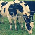 A granel valla de ganado/cerca ciervos/ovejas cerca( iso y bv certificatiion)