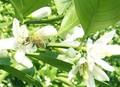 Pura miel/de miel de abeja/caliente de ventas de la miel