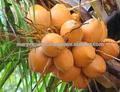 100% fresca de coco