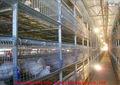 jaula para el crecimiento de pollos de engorde