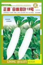 Zy no. 13 stock- planta de corto- hoja de rábano blanco de semillas