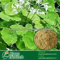 Mejora extracto brevicornum epimedium sexual 100% natural