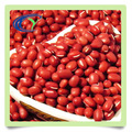 import adzuki bean price with good quality
