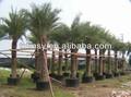 Raíz de la planta crecimiento contenedores/olla--- fabricante profesional