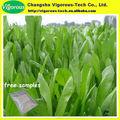 Extrato de alta qualidade Chicory Root / Chicory Root Extract pó / Extrato da raiz de chicória em pó