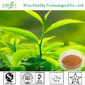 fabricante de porcelana de extracto de té verde se utiliza para la alimentación suplemento