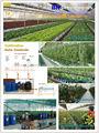 Sistema Hidroponico de NFT para Lechugas y cultivos de corta duracion