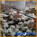 pan automático sistema de alimentación para pollos de engorde