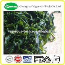fucoxantina extracto de algas marinas