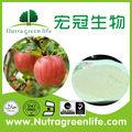De salida de fábrica aditivosalimentarios superior calidad de manzana en polvo( nombre latino: malus pumila