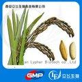 Extrato de farelo de trigo 99% ácido ferúlico
