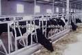 cabeza de vaca de bloqueo