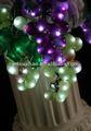 Luces de la uva del color púrpura y verde