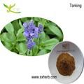 natural de sementes de chia extrato