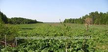 De tierras agricultoras en la región de Tver en Rusia