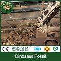 Lisaurus-R Grande esqueleto del dino en la exposición