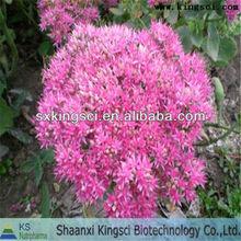 100% natural extracto de rhodiola rosea