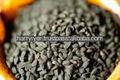 semillas de kalonji